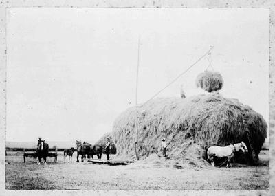 Hay stacking scene.