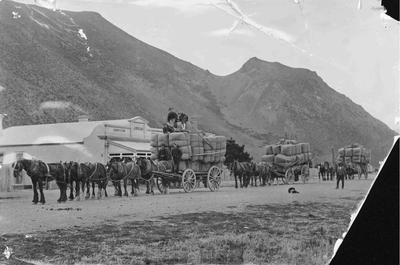 Horse-drawn wool wagons, Kurow