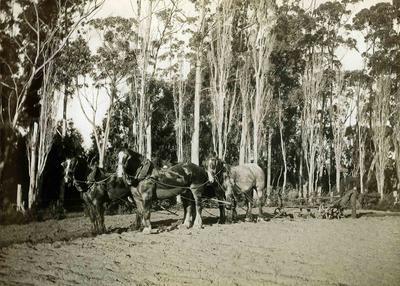 Totara Ploughing