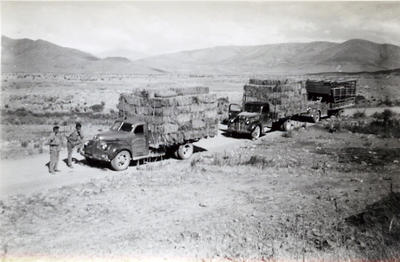 Kurow Motor Garage and Service Co. Ltd. trucks transporting hay