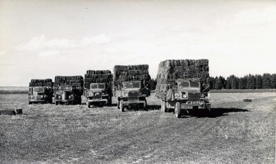 Kurow Motor Garage and Service Co. Ltd. Trucks transporting hay