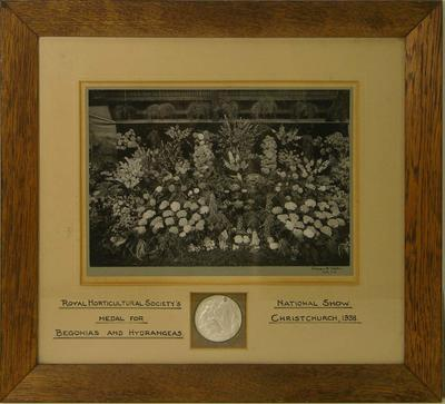 Medal for Begonias and Hydrangeas