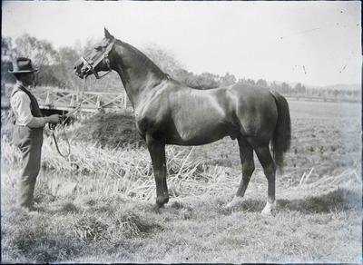 Horse Solferino at Elderslie Estate. Unidentified man