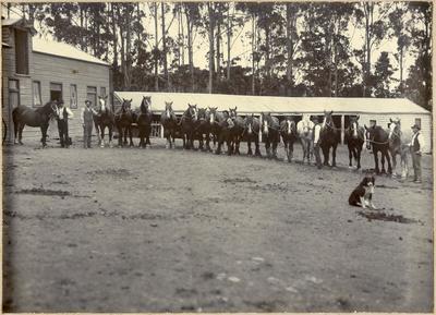17 Draught Horses, Bushey Park