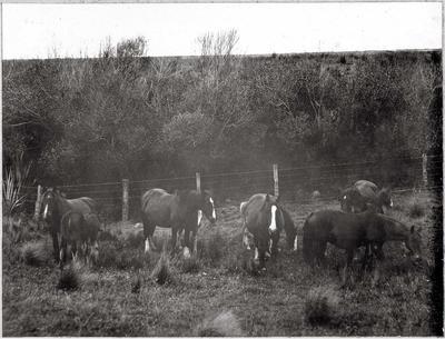 Brood Mares and Foals, Heathfield