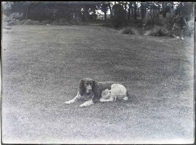Dog. Reid family Elderslie