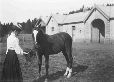 Nellie Holmes. Elderslie Estate; 1352P