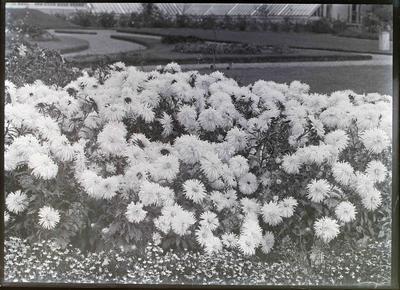 Elderslie gardens