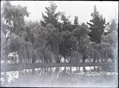 Elderslie Estate. Swan on lake