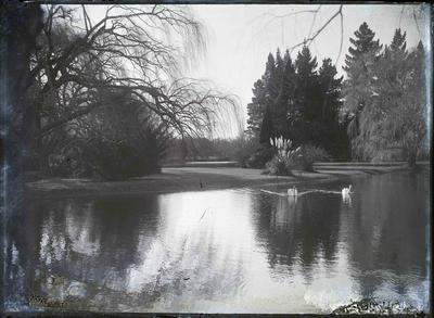Elderslie Estate. Swans on lake
