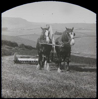 Clydesdales harvesting. Elderslie Estate