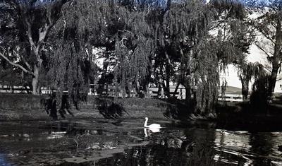 Elderslie Estate, Lake