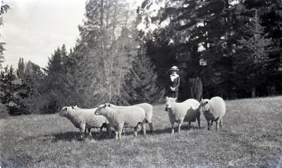 Unidentified woman with sheep. Elderslie Estate; J M Brown Bookseller and Stationer; P0021.173