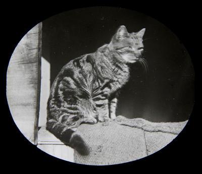 Cat. Elderslie Estate