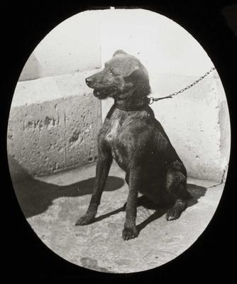 Dog. Elderslie Estate