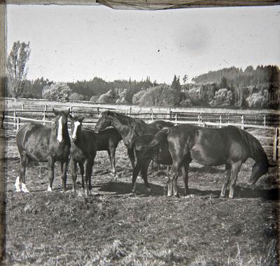 Horses. Elderslie Estate; 2015/441.1402