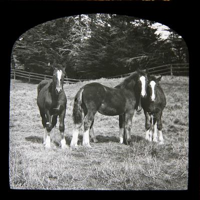 Horses at Elderslie Estate