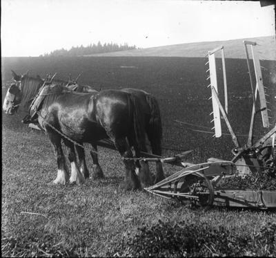 Elderslie Estate. Harvesting, North Otago