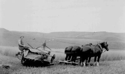 Harvesting, North Otago