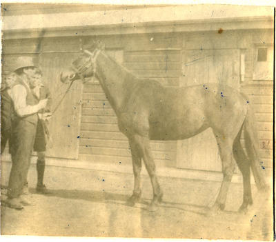 The race horse Warstep. Waitaki Boys' High School album of Ralph Garland; P0109.063.31