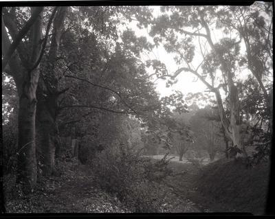 Oamaru Creek, Oamaru Public Gardens.