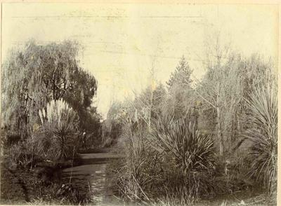 Oamaru Public Gardens [?]