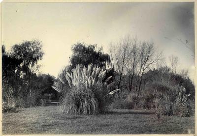 Gardens, unidentified; 2014/45.02.031