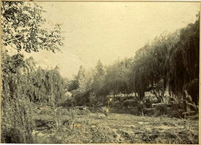 Oamaru Public Gardens; 2014/45.02.042