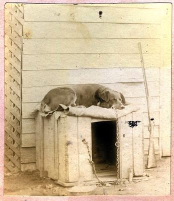 Dog sleeping on top of dog house; 2014/45.02.046