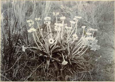 Flowers; 2014/45.02.128