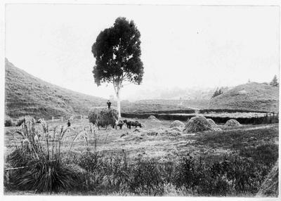 Haystacks on The Glebe property