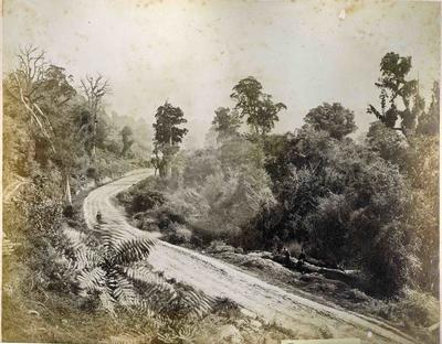 The old Coach Road near Mount Cargill