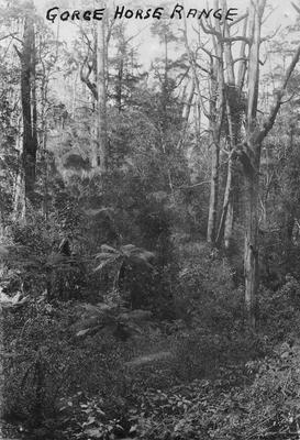 Horse Range gorge