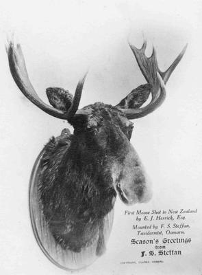 First moose shot in New Zealand, by E. J. Herrick.