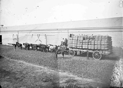 Wool Wagon. Traill and Roxby.