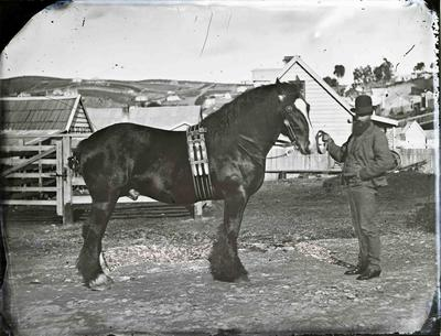 Unidentified man with draught horse.