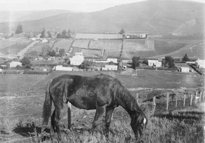 Ngapara township.  Horse in foreground