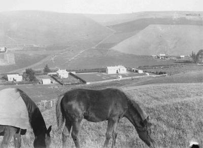 View of Ngapara
