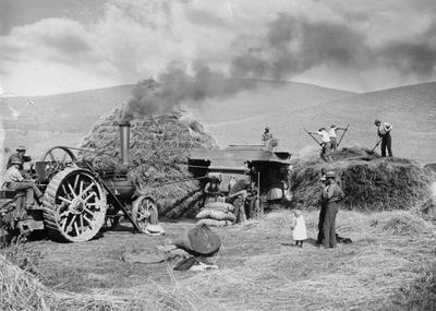 Harvesting, Traction Engine and workers