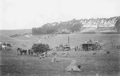 Harvesting, North Otago; 3648P