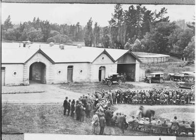 Horse sale at Elderslie Estate