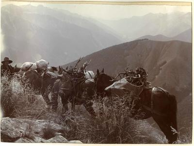 Man and horses on mountain trail