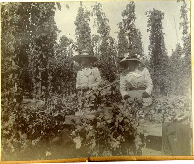 Women harvesting hops