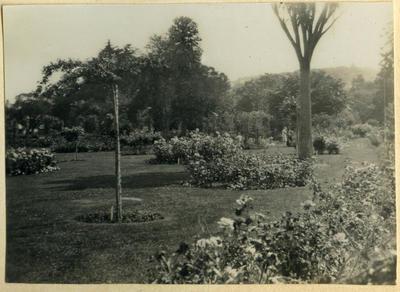 Garden, location unidentified