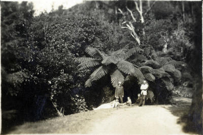 Five men on a bush road