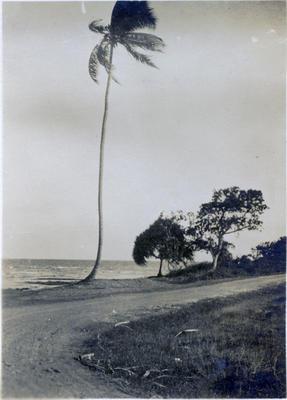 Beach, Fiji; Macfie, Robert; 2014/43.2.115