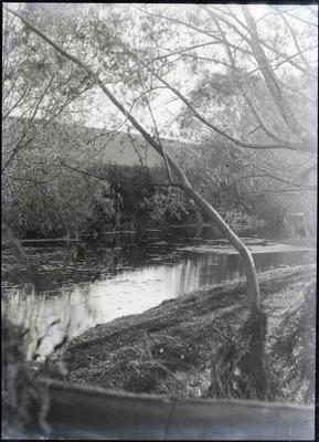 Oamaru Gardens [?] Lake