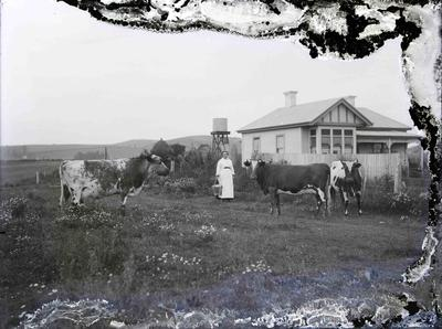 Unidentified woman with cows