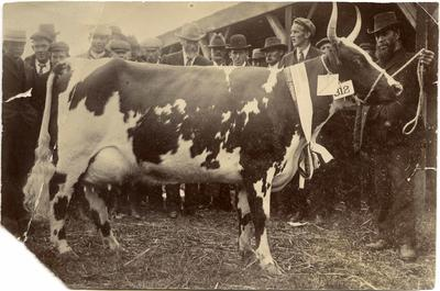 Ada II of Haydowns, Canterbury Agricultural and Pastoral Association Metropolitan Show.; P0176.8