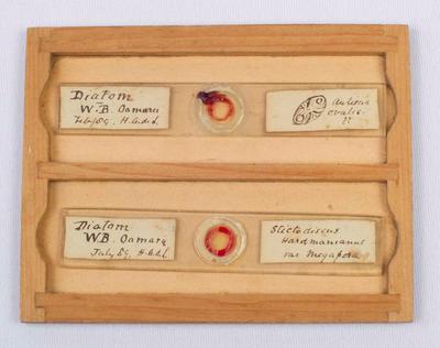 Box of Diatom Slides
